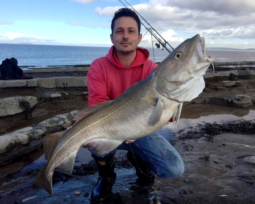 Monster Shore Caught Cod From Somerset Reefs